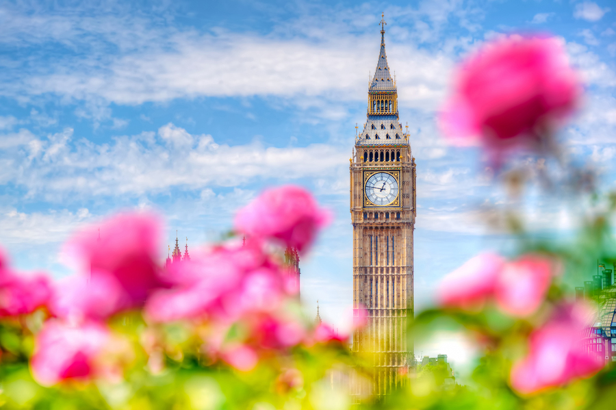 Big Ben, the Palace of Westminster in London, UK. View from a public garden with beautiful roses flowers at sunny spring, summer day.